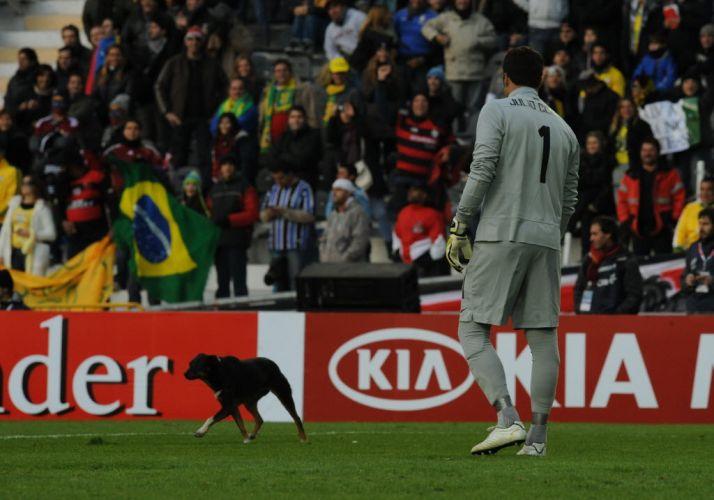 Julio Cesar observa cachorro que invadiu o gramado durante a partida entre Brasil e Venezuela