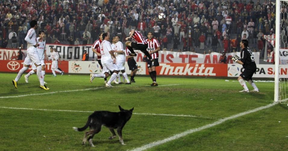 Cachorro entra no campo e observa lance da partida entre Estudiantes e Internacional
